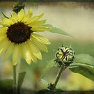 Sunflower and Bud by Sue  Fellows