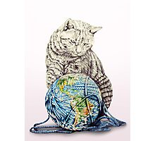 Our feline deity shows restraint Photographic Print