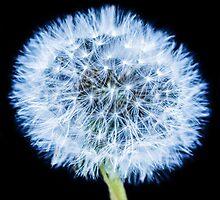 Blue Dandelion by MMPhotographyUK