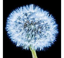 Blue Dandelion Photographic Print
