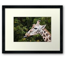 Cheeky Giraffe! Framed Print