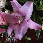 Pink Lily by Gilberte