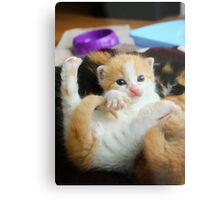 Kitten Yoga Metal Print