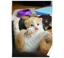 Kitten Yoga Poster