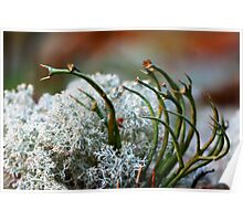 tantacles lichen Poster