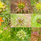 Lilycrest Gardens - Summer Begins by Marilyn Cornwell