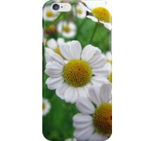 Daisies #3 iPhone Case/Skin