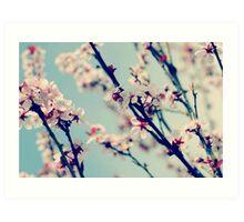 springs bloom~ Art Print