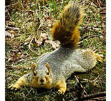 Surprise Mister Squirrel Photographic Print