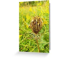 Queen Anne's Lace Greeting Card