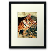 male cat Framed Print