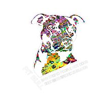 Pitbull BSL White Photographic Print