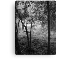 Mysterious athmosphere in the forest Canvas Print