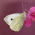 You give me butterflies, and take my breath away..... by Yool