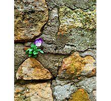 Foundation Flower Photographic Print