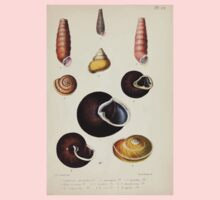 Proceedings of the Zoological Society of London 1848 - 1860 V5 Mollusca 050 One Piece - Long Sleeve