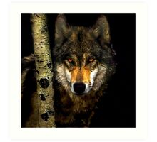 Wolf from Kaibab Forest in Arizona Art Print