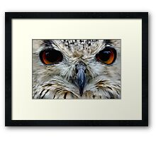 Bengali Eagle Owl - Painted Framed Print