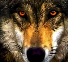 Wolf from Kaibab Forest in Arizona Sticker