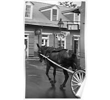 New Orleans - Bourbon Street Horse Poster
