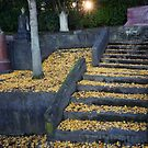 Cemetery Path, a Tribute to an Unfinished Journey  by Peter Kurdulija