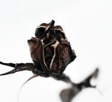 Dried Iris Sticker