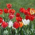 Tulip Patch Pillow by Monnie Ryan