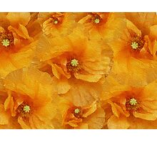 Poppy flower oil painting Photographic Print
