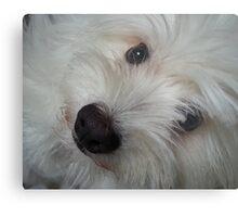 Emotional Support Dog(Landscape) Metal Print
