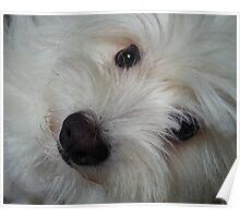 Emotional Support Dog(Landscape) Poster