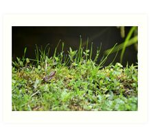 Young frog chilling in grass Art Print