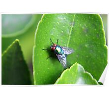 Eye of a Fly on a Leaf Poster