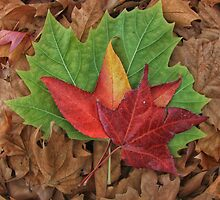 Autumn Leaves by Kym Howard