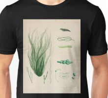 The botany of the Antarctic voyage of H M  discovery ships Erebus and Terror in the Years 1839 1843 Joseph Dalton Hooker V1 169 Unisex T-Shirt