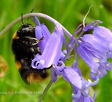 Hugging Bee by Johindes