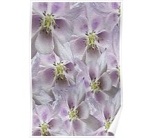 Flower Floral oil painting Poster