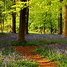 Bluebell path by Rachel Slater