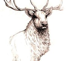 Stag in Pencil by justaholmesboy