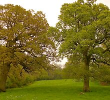 Rydon Oaks by Mike  Waldron