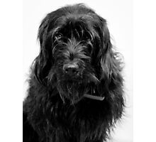 Hang Dog face Photographic Print
