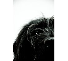 Sniff the Dog.... Photographic Print