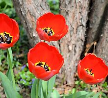 Red Tulips in the Garden by Kathleen Brant