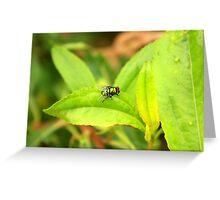 Fly on a Green Leaf Greeting Card