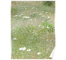 Field of Prickly Poppies Poster