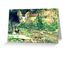 Cat Day! Greeting Card