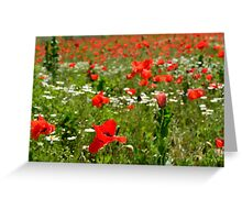 Poppy Field Near Cividale Greeting Card