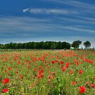 Poppy Field Near Cividale by jojobob
