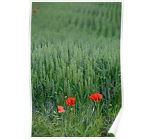 Poppies in Wheat Field Poster