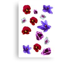 Flowers, violets Canvas Print