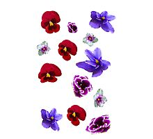 Flowers, violets Photographic Print